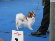 Kiamo op de winner in amsterdam 29-11-2009 Beste pup