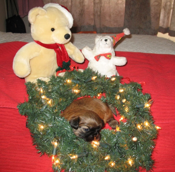 mooie kerstkrans